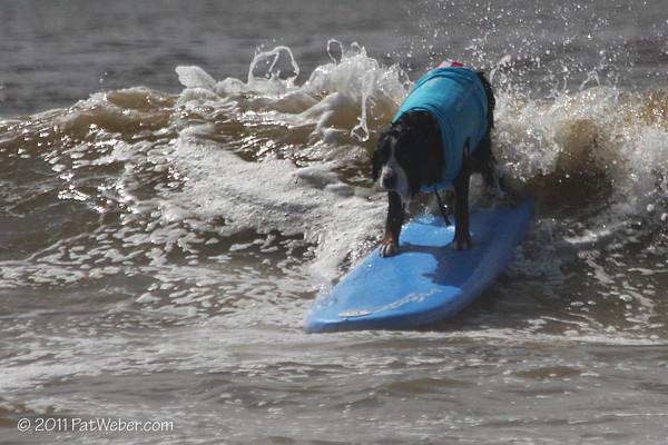 2011 09 25 Nani's Pope Mobile -Helen Woodward Animal Center Surf-Dog-a-Thon - Pat Weber Photograhy