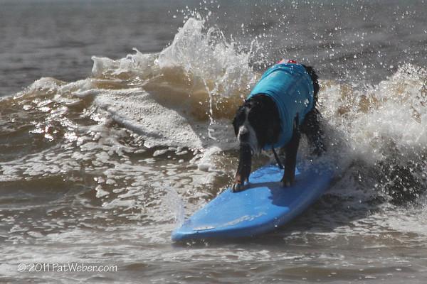 2011 06 18 Helen Woodward Surf Dog Clinic - Lori Hoffman Photography