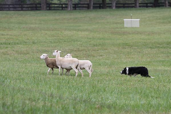 2012 Virginia Fiber Festival & Montpelier Sheep Dog Trials