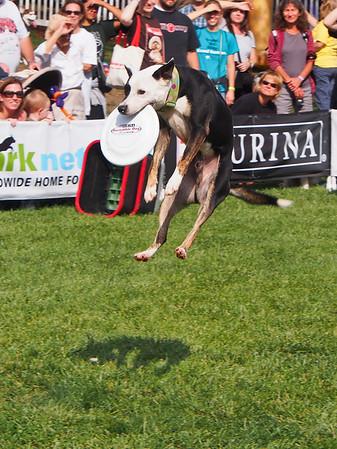 Dog Walk 2012