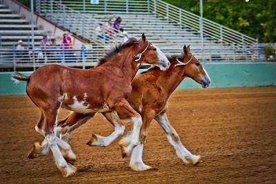 Draft Horse Classic