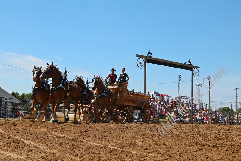 DRAFT HORSE '16