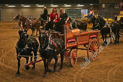 DRAFT HORSE '17 BROOKINGS