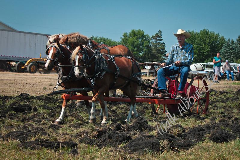 DRAFT HORSE SHOW 2012