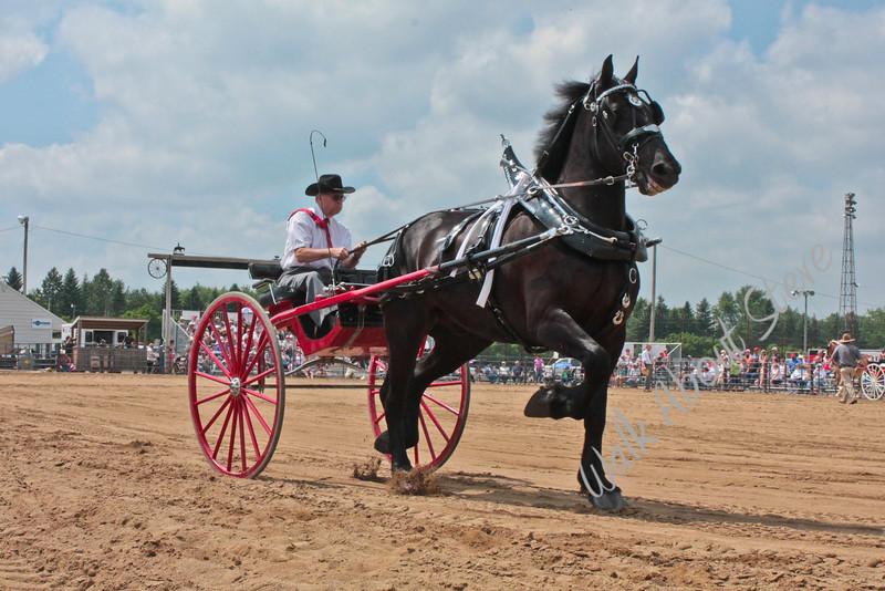 Draft Horse Show '11