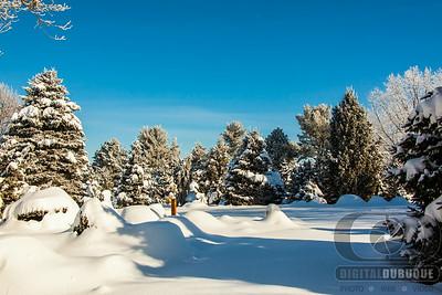 winter_pine_gardens