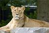 Lioness, Planckendaal