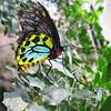 2013 0408 ECDS Butterfly Pavilion 28