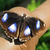 2013 0408 ECDS Butterfly Pavilion 25