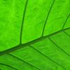 2013 0408 ECDS Butterfly Pavilion 83