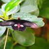 2013 0408 ECDS Butterfly Pavilion 50