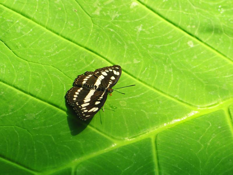 2013 0408 ECDS Butterfly Pavilion 23