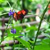 2013 0408 ECDS Butterfly Pavilion 87