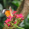 2013 0408 ECDS Butterfly Pavilion 77