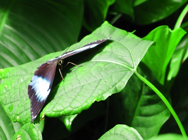 2013 0408 ECDS Butterfly Pavilion 73