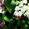 2013 0408 ECDS Butterfly Pavilion 32
