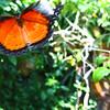2013 0408 ECDS Butterfly Pavilion 49 smudge glow