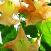 2013 0408 ECDS Butterfly Pavilion 85