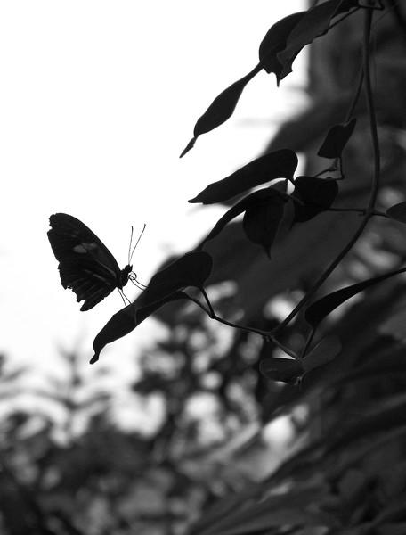 2013 0408 ECDS Butterfly Pavilion 26 bw