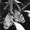 2013 0408 ECDS Butterfly Pavilion 62 bw