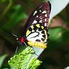 2013 0408 ECDS Butterfly Pavilion 71