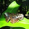 2013 0408 ECDS Butterfly Pavilion 24