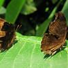 2013 0408 ECDS Butterfly Pavilion 54