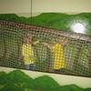2013 0408 ECDS Butterfly Pavilion 20