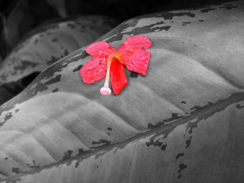 2013 0408 ECDS Butterfly Pavilion 81 select color