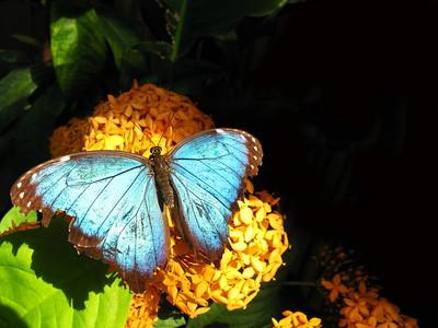 2013/04 - ECDS Butterfly Pavilion