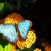 2013 0408 ECDS Butterfly Pavilion 42