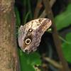 2013 0408 ECDS Butterfly Pavilion 74