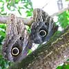 2013 0408 ECDS Butterfly Pavilion 29