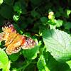 2013 0408 ECDS Butterfly Pavilion 41