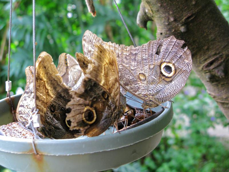 2013 0408 ECDS Butterfly Pavilion 60