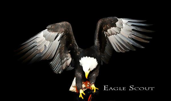 Eagle Banquet