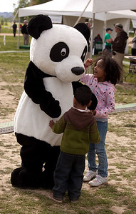 The giant panda is the rarest member of the bear family and among the world's most threatened animals - and the mascot of the World Wildlife Fund. Earth Day Celebrations on the National Mall on April 18, 2010. (Photo by Jeff Malet)