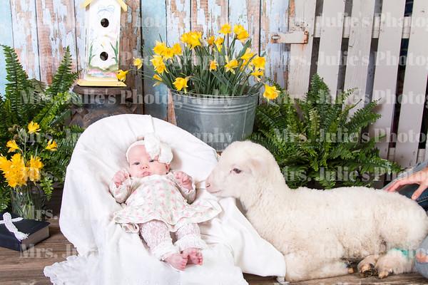 Easter Lamb 2016