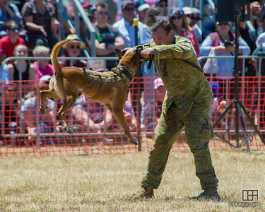 RAAF working dog