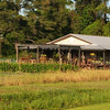 King's Farm Market, Hwy.174, Edisto Island