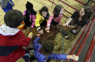 Students Petting a Baby Calf
