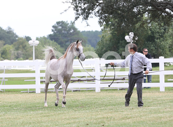 Class 6 - Yearling Colts