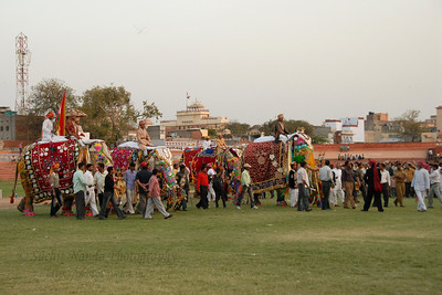 The Elephants roll in for the prize distrbution. Elephant Festival 2009 being celebrated in Jaipur on 10th Mach 2009. The elephant festival, Jaipur (Hindi: जयपुर),, is one of the most fascinating events organized in Rajasthan. This one day event coincides with Holi, the Indian festival of colors. The handlers or mahouts decorate their elephants in regal attire, and make them walk in procession at the start of the day. The procession heads to the Chaugan, the vast ground in Jaipur where this festival is hosted. The procession is watched by thousands of tourists and locals. Jaipur, Rajasthan, India.