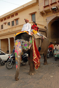 Might is right! Street scene in Jaipur. Elephant Festival 2009 being celebrated in Jaipur on 10th Mach 2009. The elephant festival, Jaipur (Hindi: जयपुर),, is one of the most fascinating events organized in Rajasthan. This one day event coincides with Holi, the Indian festival of colors. The handlers or mahouts decorate their elephants in regal attire, and make them walk in procession at the start of the day. The procession heads to the Chaugan, the vast ground in Jaipur where this festival is hosted. The procession is watched by thousands of tourists and locals. Jaipur, Rajasthan, India.