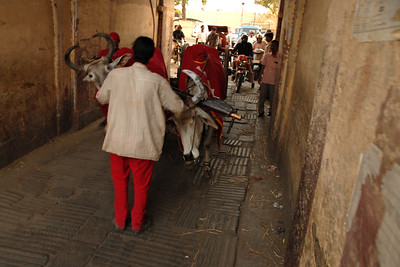 Street scene in Jaipur. Elephant Festival 2009 being celebrated in Jaipur on 10th Mach 2009. The elephant festival, Jaipur (Hindi: जयपुर),, is one of the most fascinating events organized in Rajasthan. This one day event coincides with Holi, the Indian festival of colors. The handlers or mahouts decorate their elephants in regal attire, and make them walk in procession at the start of the day. The procession heads to the Chaugan, the vast ground in Jaipur where this festival is hosted. The procession is watched by thousands of tourists and locals. Jaipur, Rajasthan, India.