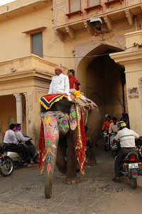 Right of way on the streets of Jaipur. Elephant Festival 2009 being celebrated in Jaipur on 10th Mach 2009. The elephant festival, Jaipur (Hindi: जयपुर),, is one of the most fascinating events organized in Rajasthan. This one day event coincides with Holi, the Indian festival of colors. The handlers or mahouts decorate their elephants in regal attire, and make them walk in procession at the start of the day. The procession heads to the Chaugan, the vast ground in Jaipur where this festival is hosted. The procession is watched by thousands of tourists and locals. Jaipur, Rajasthan, India.