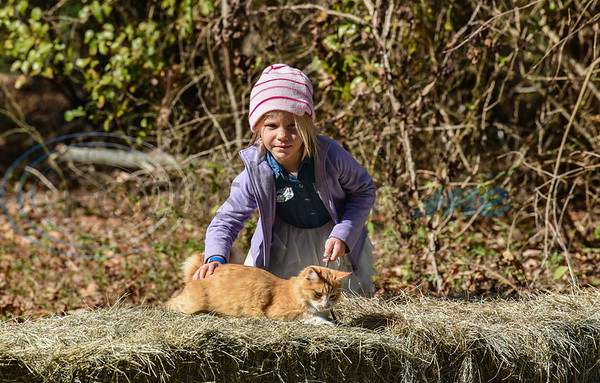 A young girl plays with a retreat cat at the Elijah's Retreat Fall Festival in Jacksonville. Elijah's Retreat is a 50-acre family experience that allows children to enjoy hayrides, feeding farm animals, fishing, bird watching, star gazing, finding eggs in chicken coops and mini-equine therapy sessions. (Jessica T. Payne/Tyler Morning Telegraph)