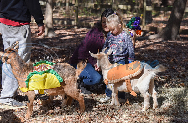 Gabriella Watson, 4, pets a goat dressed as a hot dog while attending Elijah's Retreat Fall Festival on Saturday. The event was a celebration of the retreat's 10th year in business. (Jessica T. Payne/Tyler Morning Telegraph)