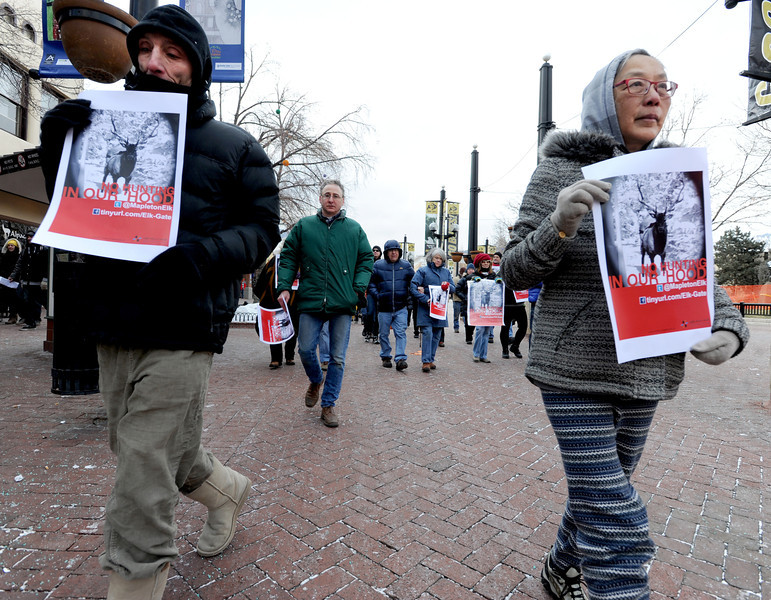 "Frank Jones, left, and Betty Woon, joins dozens of marchers down the Pearl Street Mall.<br /> A group of Boulder residents is organized a ""silent"" walk on the Pearl Street Mall on Sunday to honor the elk shot in the Mapleton Hill neighborhood on New Year's Day.<br /> For a video and more photos of the march, go to  <a href=""http://www.dailycamera.com"">http://www.dailycamera.com</a>.<br /> <br /> Cliff Grassmick  / January 13, 2013"