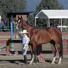 Showmanship - Junior/Amateur